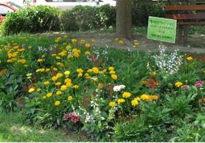 fleurs compost cantineslider