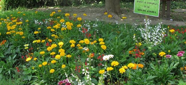 Les déchets verts: Un trésor au jardin